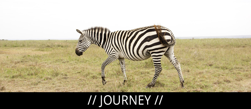 menu-journey-zebra